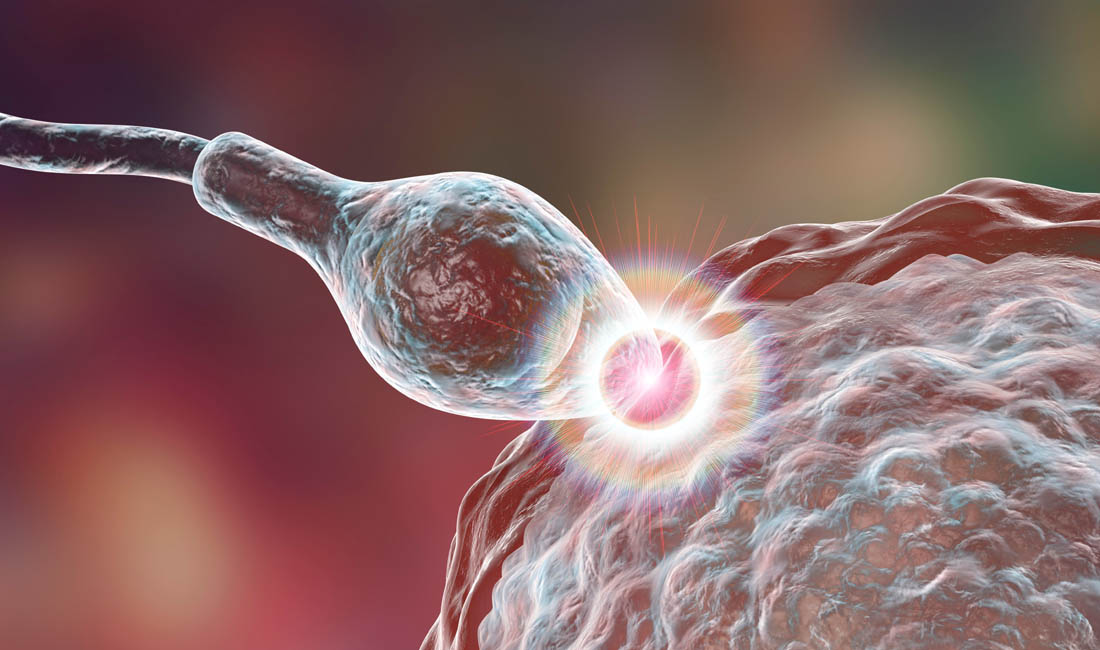 IVF PROGRAM USING DONOR GAMETES AND EMBRYOS